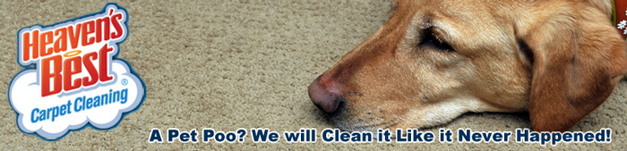 Pet Odor and Pet Stain Removal_Pet Damaged Carpet Cleaning
